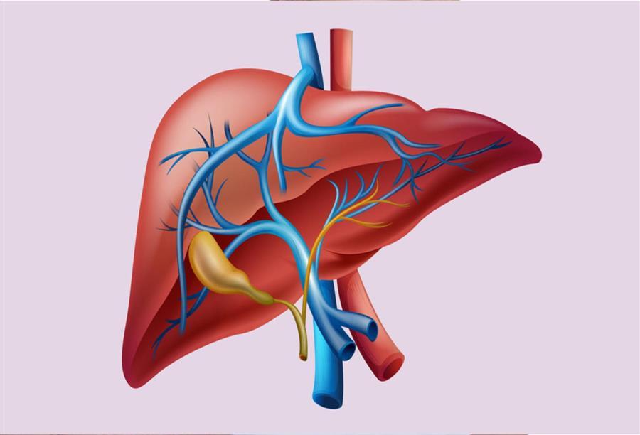 نتيجة بحث الصور عن فيروس التهاب الكبد