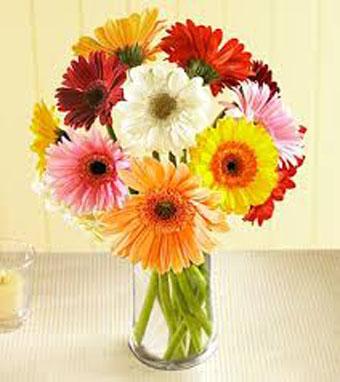 """زهرات الربيع """"الأقحوان"""""""